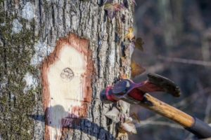 Mise de bois communale @ Refuge forestier communal